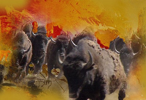 Herd of buffaloes on the rampage