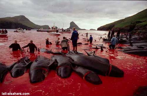 Whales in blood water